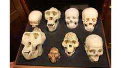 Physical Anthropology: Introduction to Anthropology, Psychology, and Sociology HSP3U HSP3C