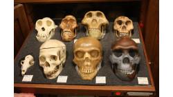 Evolution of Early Humans Lab SBI3U