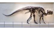 Prehistoric Biodiversity Virtual Visit
