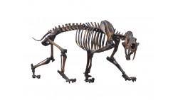 Prehistoric Biodiversity