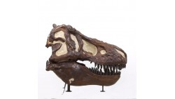 Organ Systems: Dinosaurs Like Me!